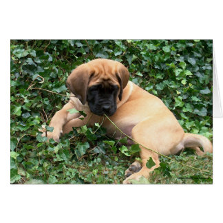 Mastiff puppy in Ivy Greeting Cards