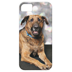 Mastiff X - Berkeley iPhone SE/5/5s Case
