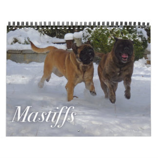 Mastiffs Calendar