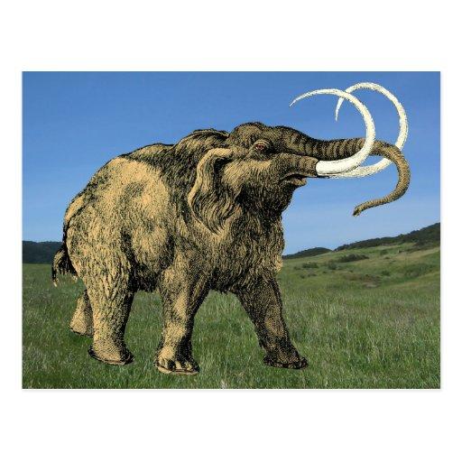Mastodon Postcards