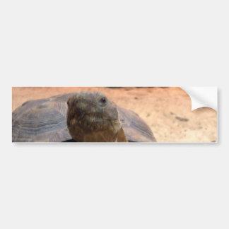 Materia amistosa del diseñador de la tortuga del d pegatina de parachoque