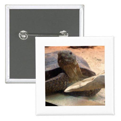 Materia amistosa del diseñador de la tortuga del d pin