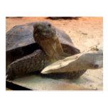 Materia amistosa del diseñador de la tortuga del tarjeta postal