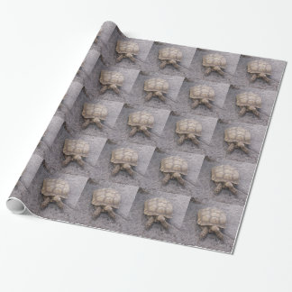 materia de la tortuga papel de regalo