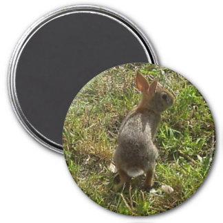 Materia de las liebres del conejo de conejito imán redondo 7 cm