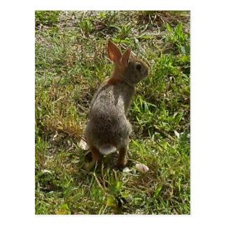 Materia de las liebres del conejo de conejito tarjeta postal