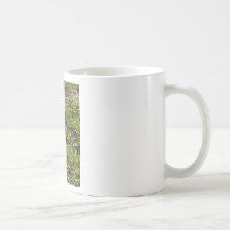 Materia de las liebres del conejo de conejito taza de café