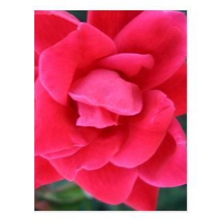 Materia del diseñador de CricketDiane del rosa Tarjetas Postales
