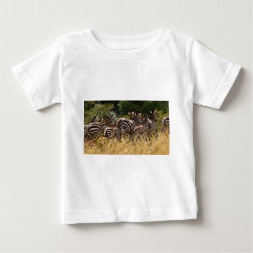 Materia fresca de la última cebra africana del poleras