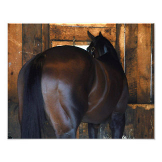 Materiality Florida Derby Winner Photo Print