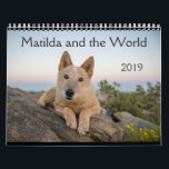 "Matilda and the World 2019 Calendar<br><div class=""desc"">Matilda was a stray who I found living under my house--under my house!--in rural Texas. No microchip. No info at the shelters. No family looking for her, though I posted countless flyers and searched everywhere. I didn&#39;t feed her or let her into my house. I didn&#39;t even give her water!...</div>"