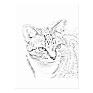 Matilda on the prowl postcards