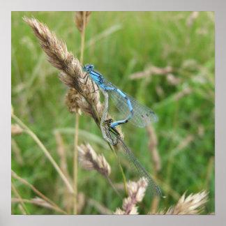 Mating Damselflies at Chimney Meadows Print