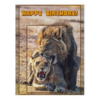 Mating lions postcard