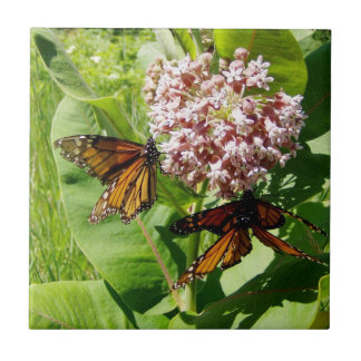 Mating Monarch Butterfly on Milkweed Photo Ceramic Tile