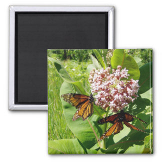 Mating Monarch Butterfly on Milkweed Photo Magnet