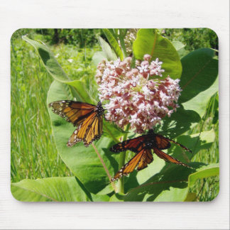Mating Monarch Butterfly on Milkweed Photo Mouse Pad