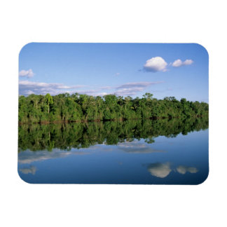 Mato Grosso State, Amazon, Brazil. Forested Vinyl Magnets