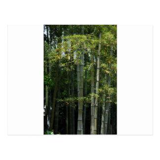 Matorral de bambú postal