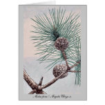 Matsu pine / Megata Ukiyo-e. Cards