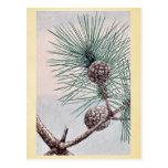 Matsu pine / Megata Ukiyo-e. Postcards