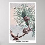 Matsu pine / Megata Ukiyo-e. Posters