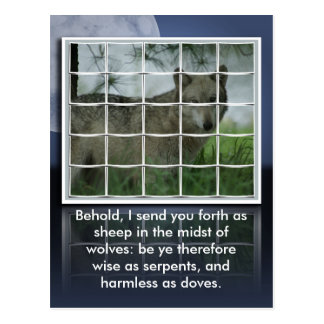 Matthew 10:16 BIBLE QUOTE SHEEP AMONG WOLVES Postcard