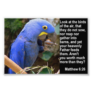 Matthew 6 26 with Blue Macaw Art Photo