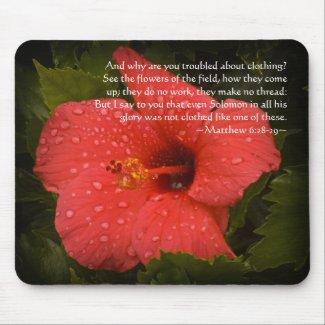 Matthew 6:28-29 Hibiscus