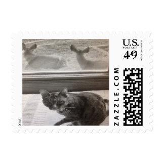 Matty Our Beloved Cat Postage