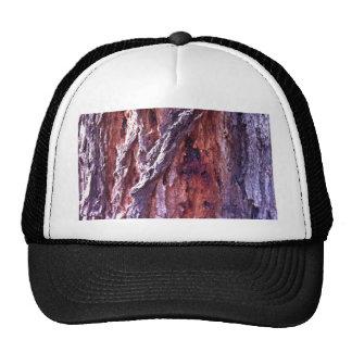 Mature Redwood gum tree bark in summer Cap