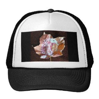 Mature  Turkey Hats