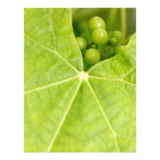 Maturing grapes flyer