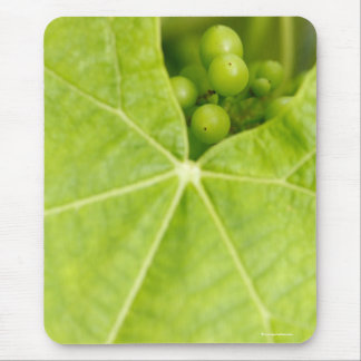 Maturing grapes mouse pad