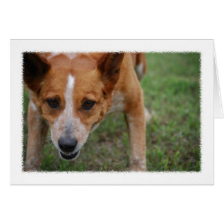 Maudie the Cow Dog Note Card