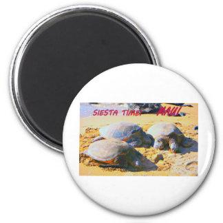 MAUI  GREEN SEA TURTLES   SIESTA TIME! MAGNET