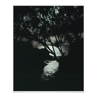 Maui Hawaii Moonlight Sescape Sacred Pool Photo Print