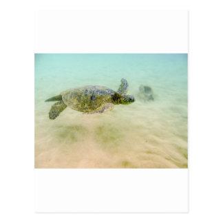 Maui Hi Beach Turtle 2014 Post Card