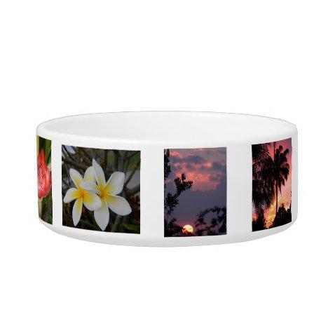 Maui Pet Bowl