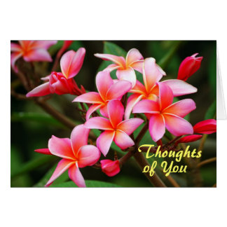 Maui Plumeria Flowers, Thinking of You Card
