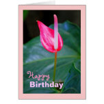 Maui Tropical Red Anthurium, Birthday Greeting Card