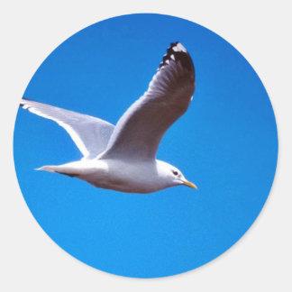Maúlla la gaviota en vuelo pegatina redonda