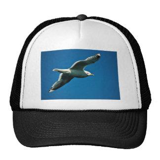 Maúlla la gaviota en vuelo sobre el lago Frazer Gorros
