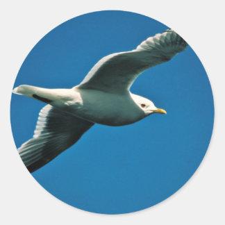 Maúlla la gaviota en vuelo sobre el lago Frazer Pegatina Redonda