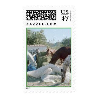 Maureen's Herd Postage