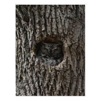 Maurice the Screech Owl Postcard