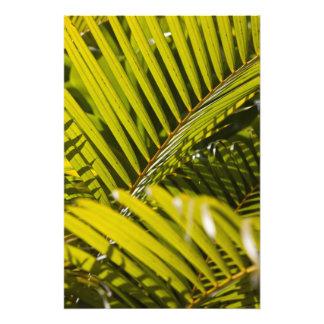Mauricio, Mauricio central, Moka, palma Fotografías