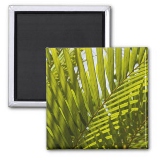 Mauritius, Central Mauritius, Moka, palm 2 2 Inch Square Magnet