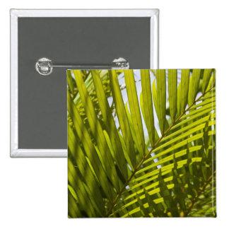 Mauritius, Central Mauritius, Moka, palm 2 Button
