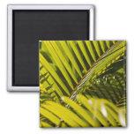 Mauritius, Central Mauritius, Moka, palm 2 Inch Square Magnet